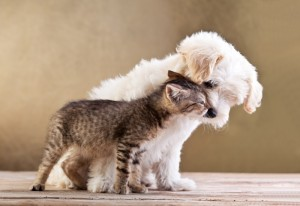 3352466-friends-dog-and-cat-together